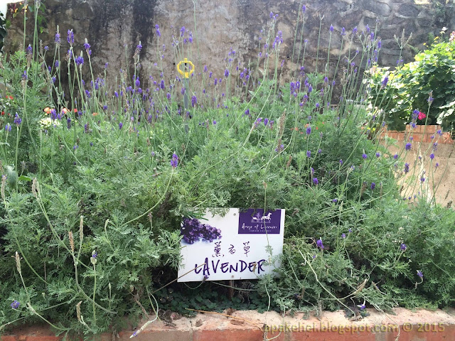 Green View Garden Cafe - House of Lavender
