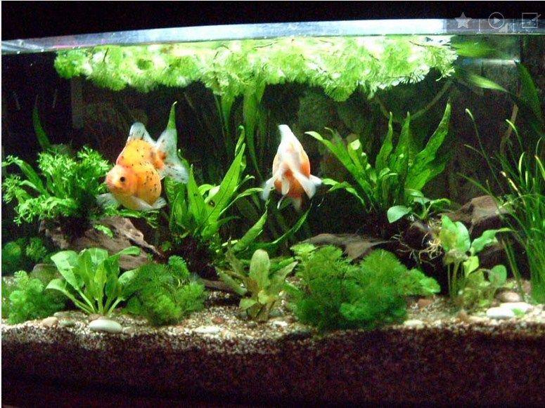 Galery Aquascape dan Ikan Hias