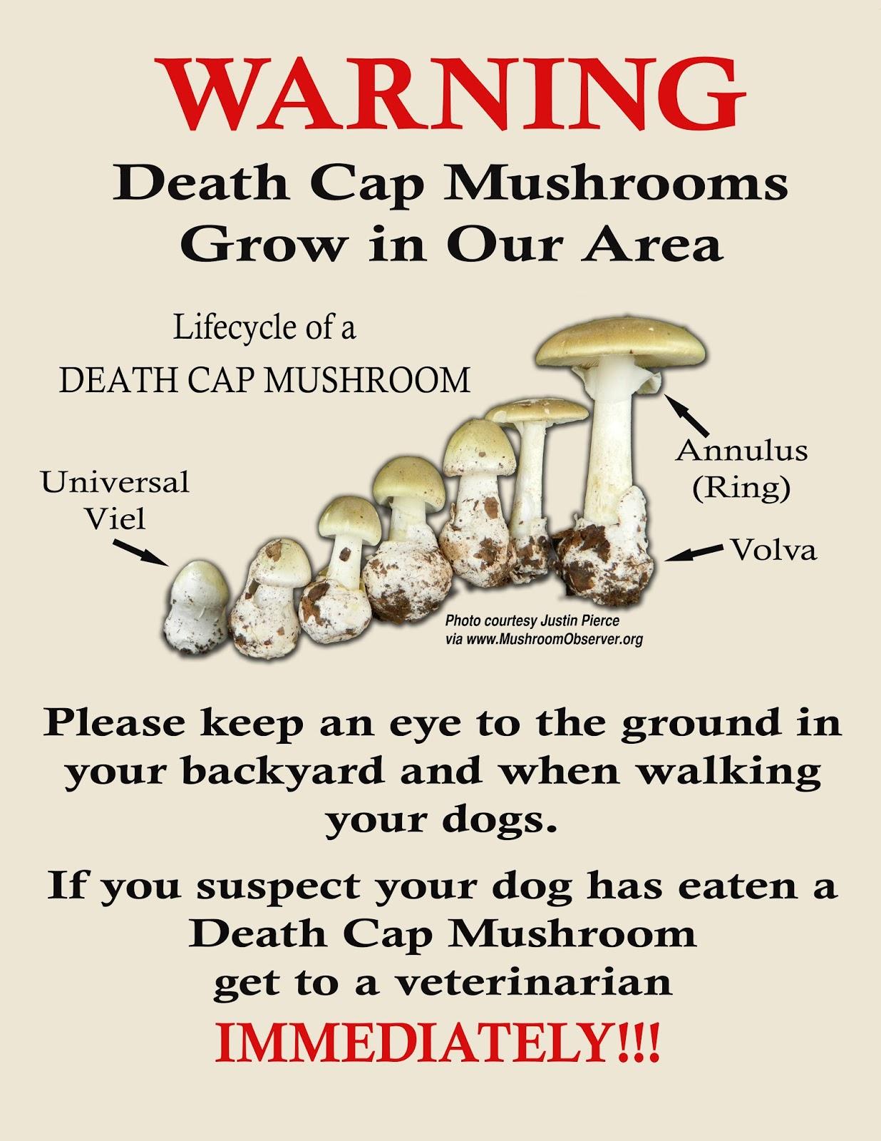 mushrooms911