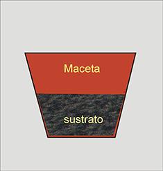 Huerta y jardiner a amarylis cultivo en maceta for Mantillo o sustrato