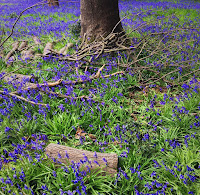 http://pridenstyle.blogspot.co.uk/2016/05/deep-into-bluebells.html