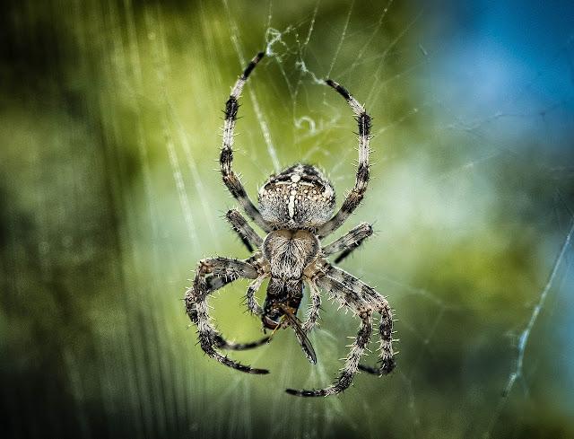 Nie skupiać się na usuwaniu pajęczyny, ale na znalezieniu pająka. To pozwala w krótkim czasie wychwycić funkcjonujące w nas mechanizmy obronne i zranienia.