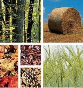 Biomasa: Energía de la madera verde alternativa