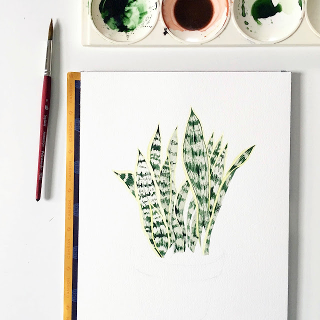 watercolors, watercolor, botanical watercolor, painting process, snake plant, sansevieria, Anne Butera, My Giant Strawberry