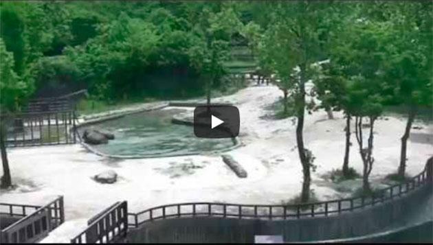 https://www.insoonia.com/dois-elefantes-salvam-filhote-de-se-afogar-em-zoologico/