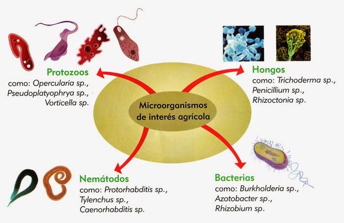microbiologia general: Impacto de los microorganismos