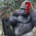 Kenapa Speaker Bisa Mengeluarkan Suara ?