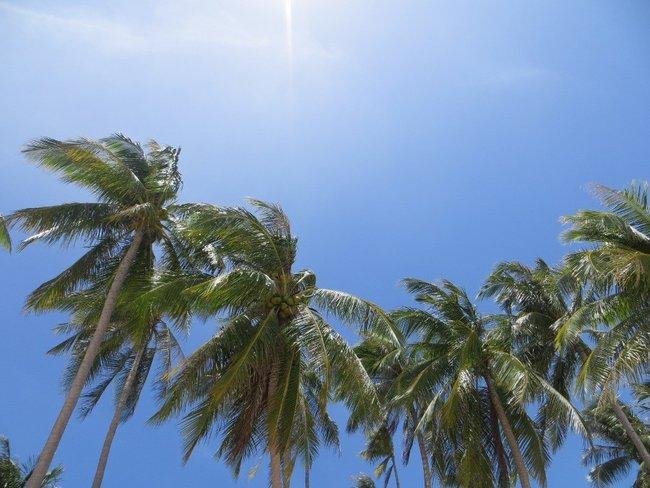 Большие пальмы