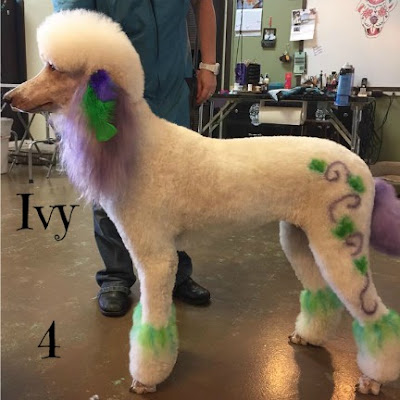 color stencils on a poodle