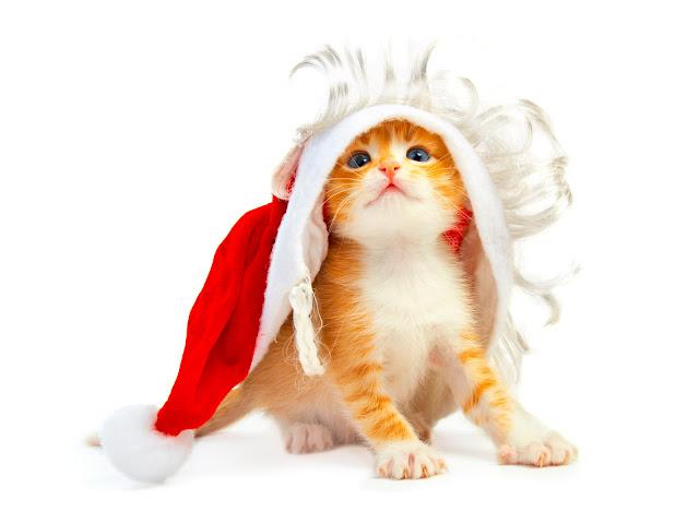 download besplatne Božićne pozadine za desktop 1600x1200 životinje mačka čestitke blagdani Merry Christmas