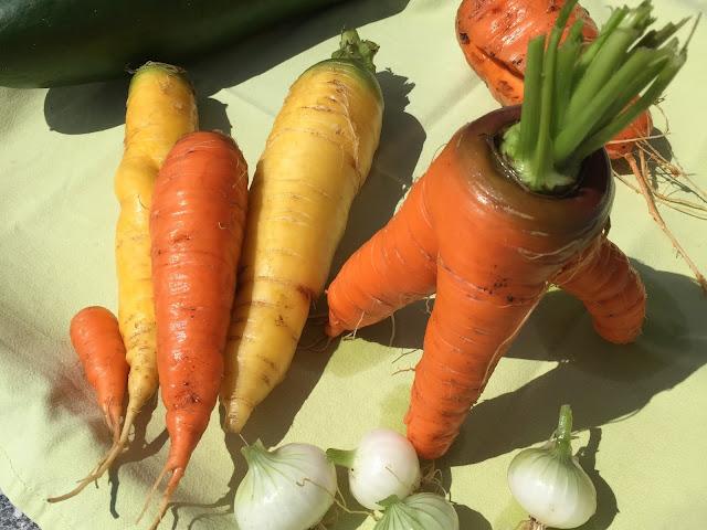 Karotten, Gurke und Zwiebeln
