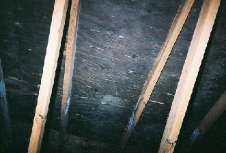 Attic mold removal diy crafting black mold removal diy tipore solutioingenieria Images