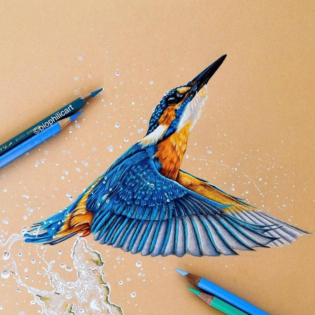 11-Kingfisher-Sallyann-Brightly-Colored-Animal-Pencil-Drawings-www-designstack-co
