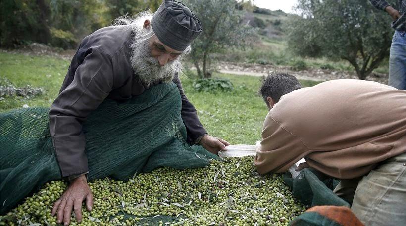 Bloomberg: Λάδι και μέλι μπορούν να βγάλουν την Ελλάδα από την ύφεση