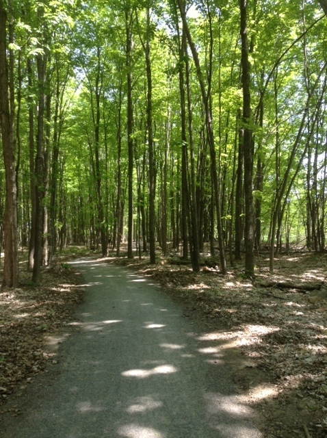 cycling trail through a hardwood bush
