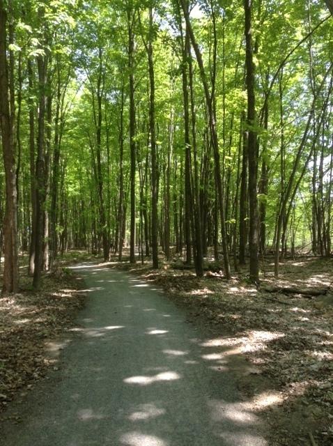 cycling trail through a hardwood bush