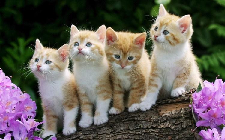 Kenapa Kucing Menoleh Saat Dipanggil Pus Ini Alasannya