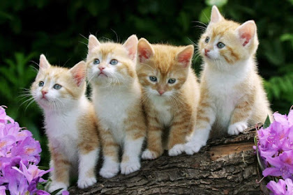 Kenapa Kucing Menoleh saat dipanggil Pus? Ini Alasannya