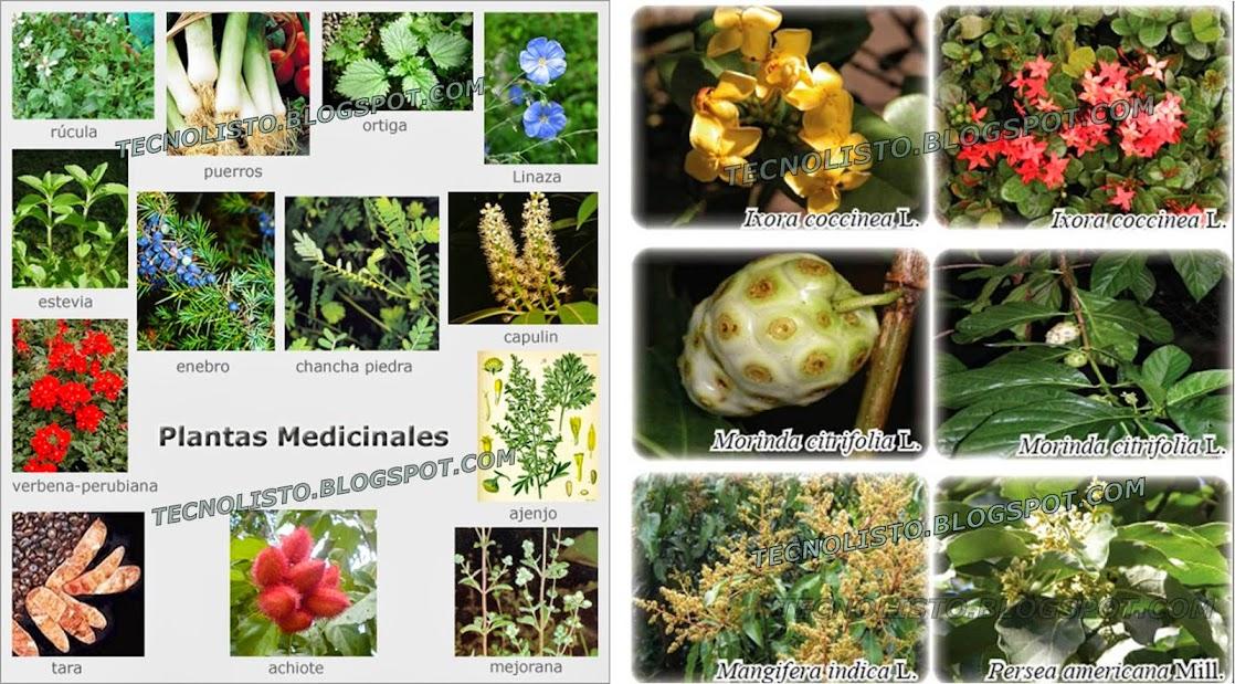 """""""Propiedades de plantas medicinales"""""""