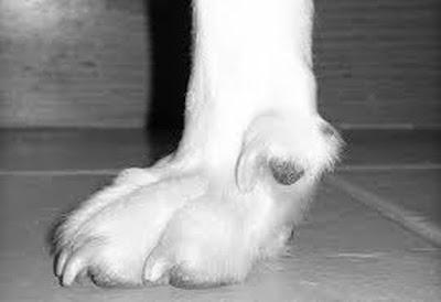 Αποτέλεσμα εικόνας για agriniolike σκύλος