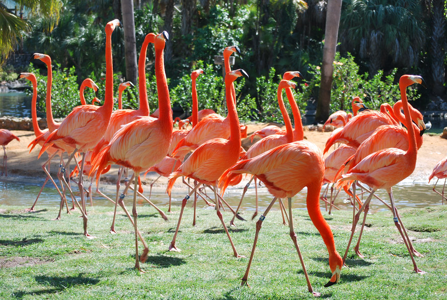 Pink Flamingos Inspiration