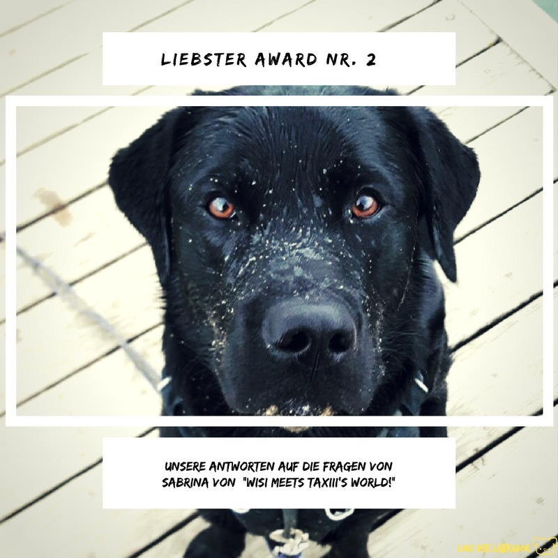 Liebster Award Loki der Labrador Sabrina
