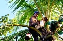 http://holikulanwar.blogspot.com/2014/09/cara-membuat-gula-merah-dari-nira-kelapa.html