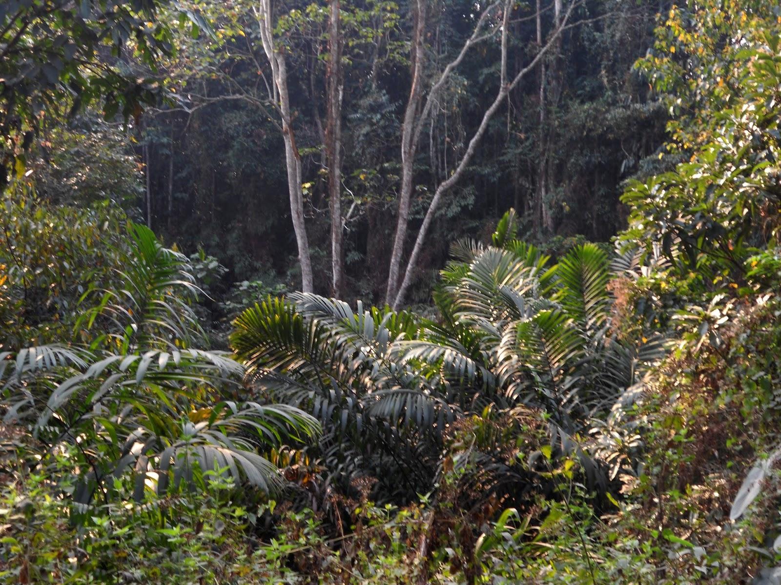 Rainforest of Assam PHOTO GALLERY