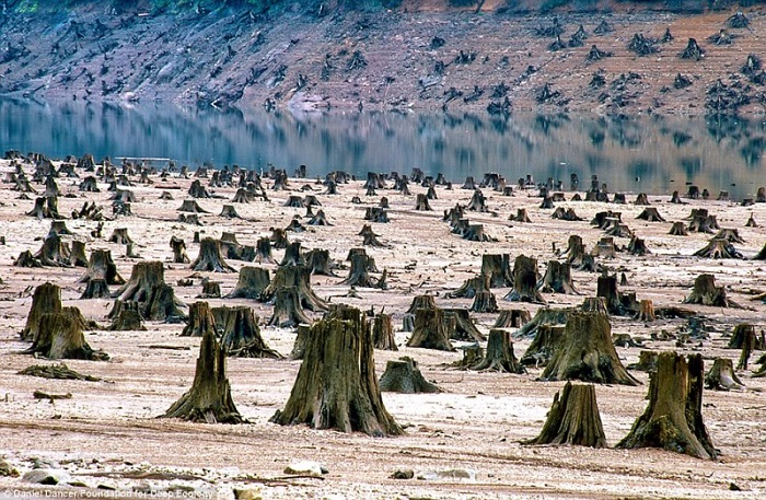 20 Pictures That Prove That Humanity Is In Danger - In Oregon, this thousand year old forest fell victim to the chain saw for a new dam
