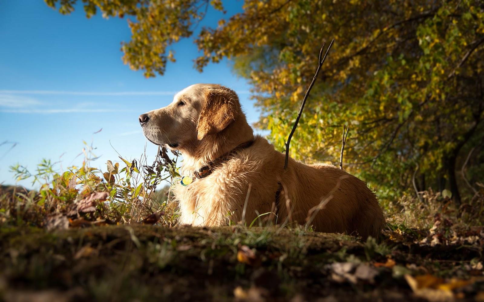 Een hond lekker aan het relaxen