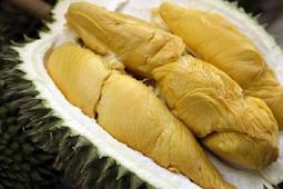 4 Manfaat Biji Durian Untuk Diet
