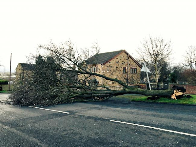 Number of fallen trees blocking roads, with one destroying bungalow in Birkenshaw