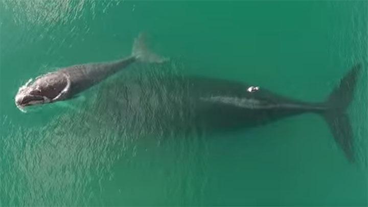 Aventura desde Puerto Madryn Ballenas kayak Sonrkel con lobos marinos