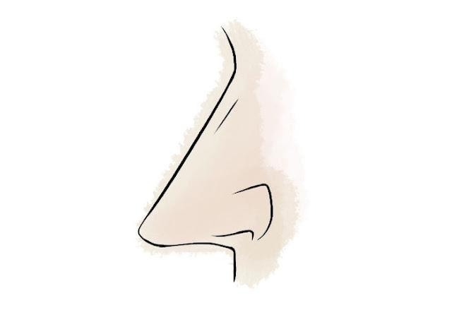 mũi thẳng Cùng xem vận mệnh của bạn qua những tướng mũi dưới đây:
