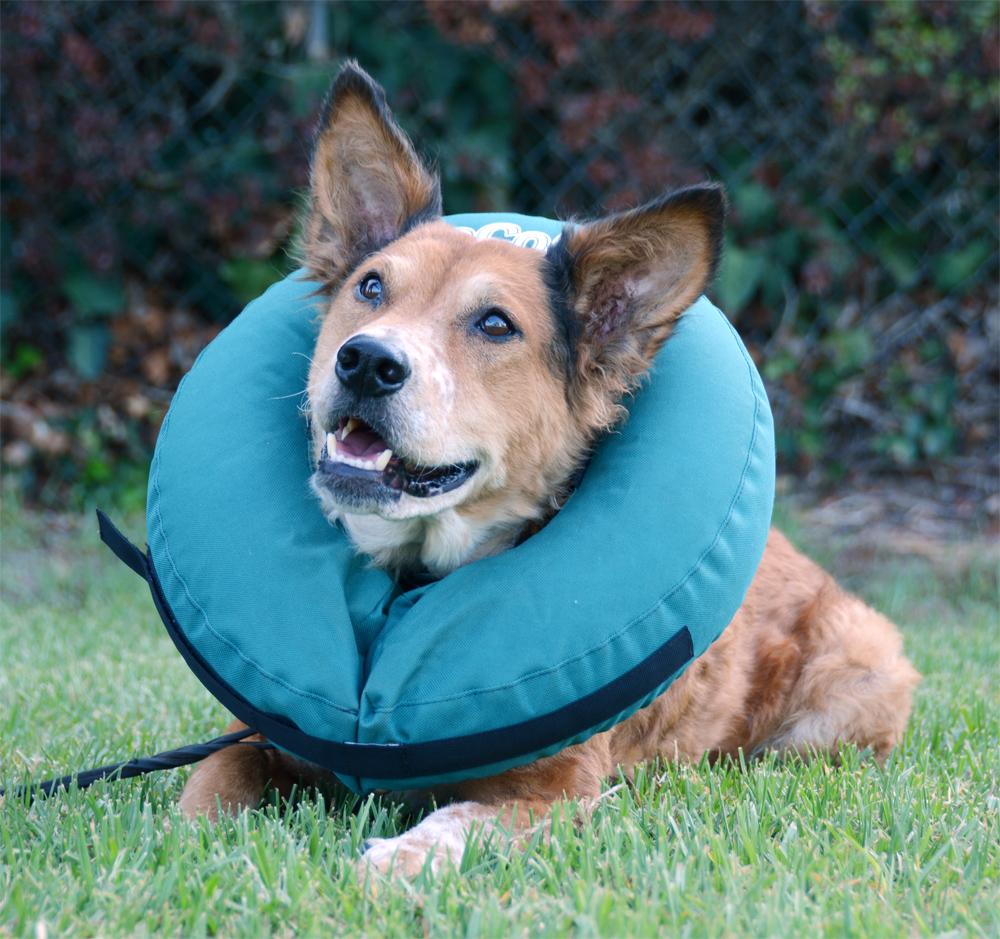 The Dog Geek Product Review Zenpet Procollar