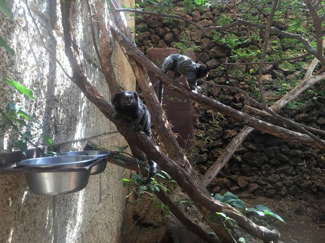Monkey-park-los-cristianos-monkeys