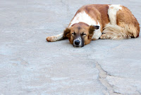 lethargy and depression are early warning signs of canine cancer