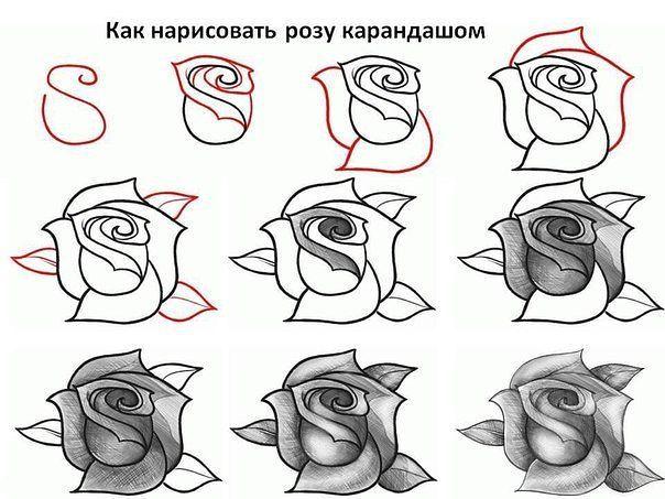 Рисунки карандашом для начинающих: цветы поэтапно