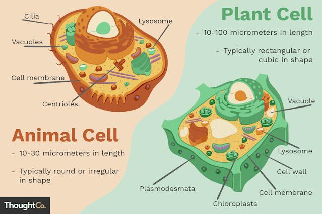 gambar sel hewan dan sel tumbuhan beserta fungsinya