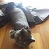 10 Foto Kucing Yang Menyesali Atas Keputusannya