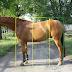 Zanim ocenisz konia - dlaczego mój nie ma ruchu?
