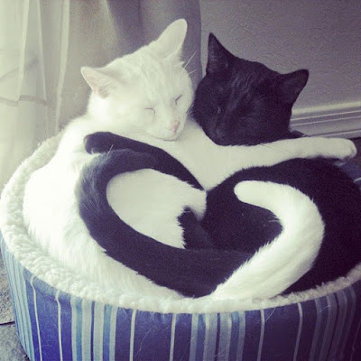chats amour