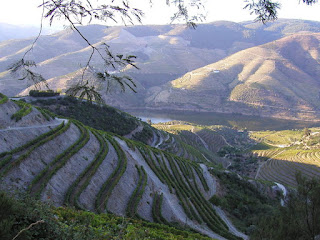 Douro valley wine terraces