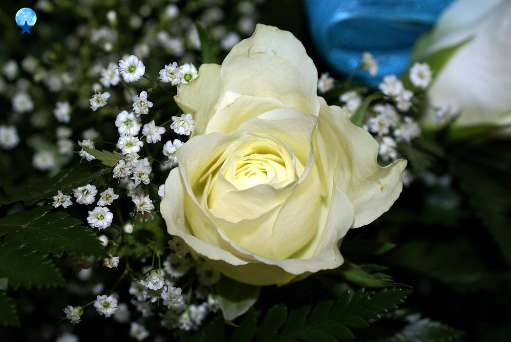 Hd flowers white roses flowers rose white bunch rose blooms now and again called the blossom of light one of the implications of white roses is everlasting affection love more grounded than death mightylinksfo