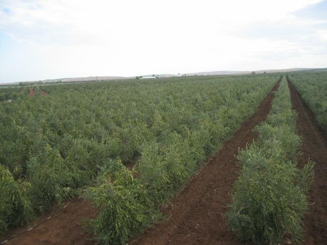 ABECEAGRARIO: REGADÍO - Conocer la Agricultura y la Ganadería