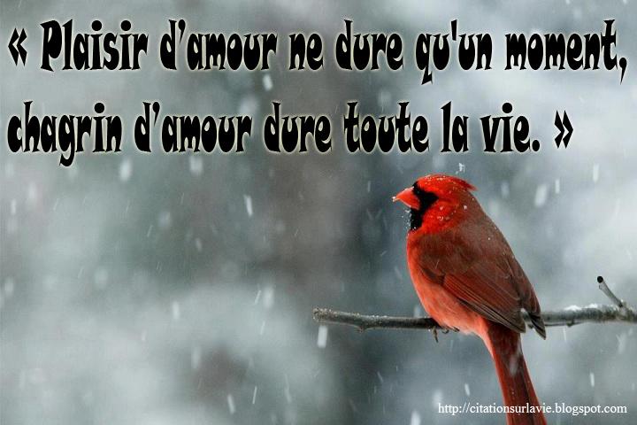 Citations en images sur la vie : citations d'amour | citation sur la ...