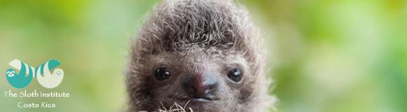 http://sloth-mtb.blogspot.lu/2016/05/chewie.html