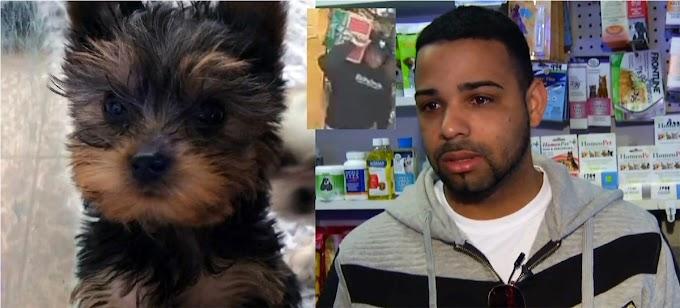 Ni los perros se salvan, ladrones roban cachorro en tienda de animales de dominicano en El Bronx