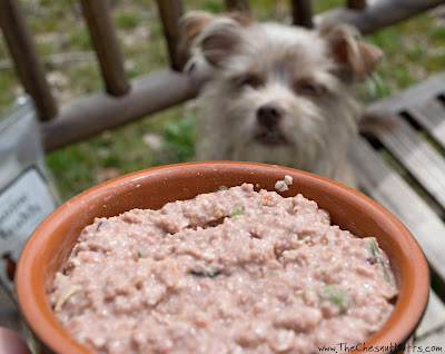 Bailey and Dr. Harvey's Canine Health Homemade Dog Food Mix