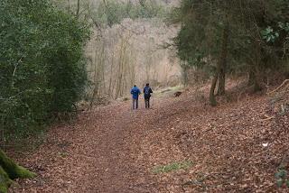 Ein breiter Waldweg auf dem zwei Wanderer wandern